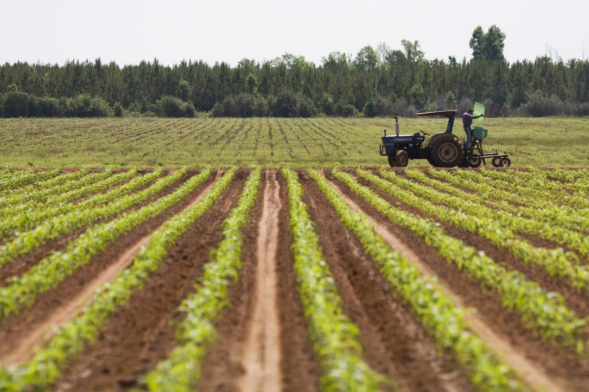 A man checks fertilizer levels on a tractor on a farm. Farm equipment, fertilization, agriculture, food crops. UF/IFAS Photo by Tyler Jones.
