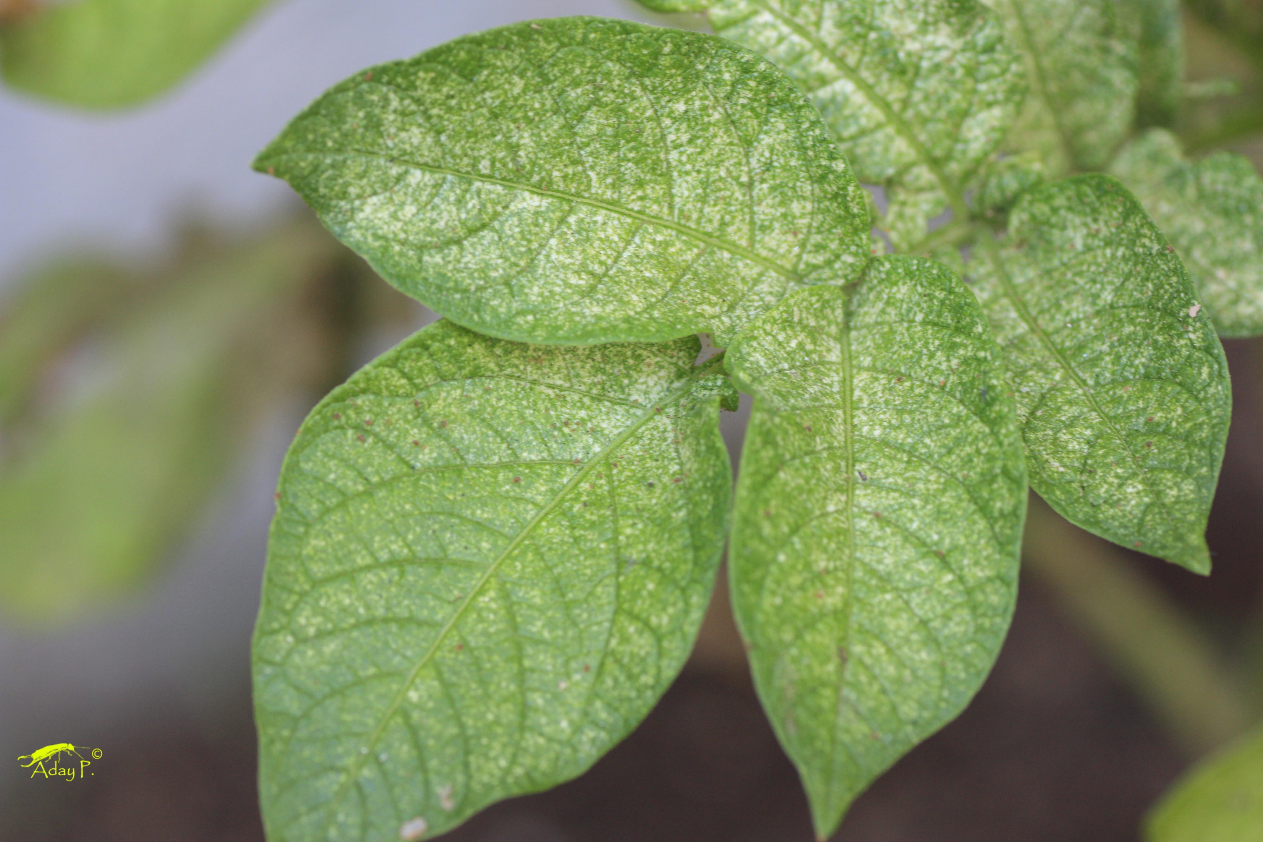 Las 10 plagas m s comunes en tu huerto asociaci n de - Como preparar las judias verdes ...