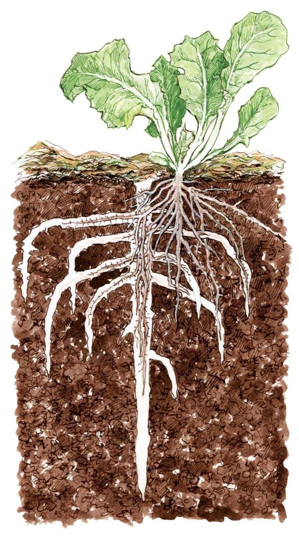 Bio perforación de cobertura vegetal. Por ELAYNE SEARS
