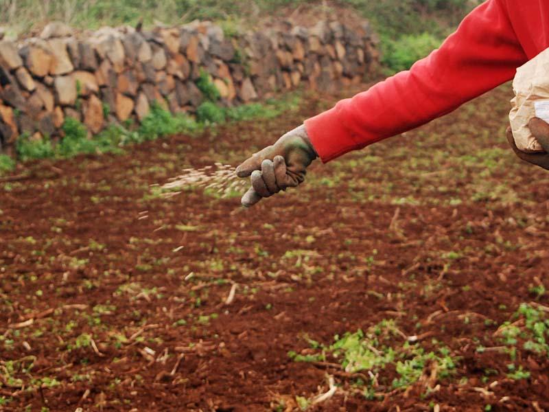 Siembra de alfalfa al voleo. Por Viveros Puente Retamar