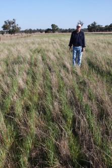 Colin Seis, dueno del rancho Winona Australia, utiliza en cultivo en pasto para cultivar cereales y alimentar borregos. Imagen Por rancho Winona.