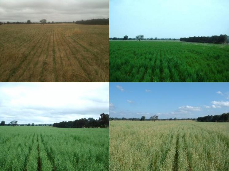 Rancho Winona utilizando cultivo en pasto, en las cuatro estaciones del año. Por Winona Farm