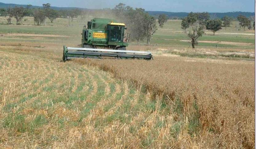 Cultivo en pasto una soluci n de agricultura regenerativa for En cuanto tiempo se cosecha la tilapia